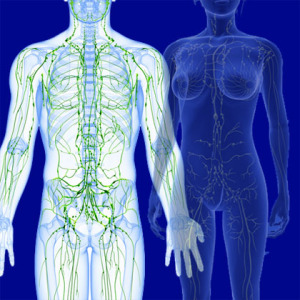 lymphatic system in the body